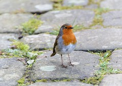 Robin (MadeleineVanWijkPhotography) Tags: