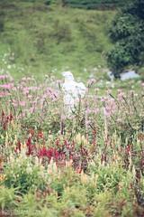 Cebu's Sirao Garden - Little Amsterdam (Kristina A. Foto) Tags: cebu visayas philippines siraogarden littleamsterdam nature travel flowers