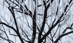 Winter (vbd) Tags: pentax k3 vbd hdpentaxda35mmf28macrolimited ct connecticut icicles newengland snow trees trumbull winter handheld manualfocus 2018 winter2018