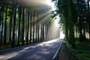 Trees and glow. (hajavitolak) Tags: alava arboles trees tranquilidad tranquility resplandor glow urrúnaga paisaje paisvasco landscape tamron tamron247028 sinespejo sony sonya7m2 sonya7ii evil mirrorless niebla fog