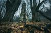 The Tower (@hipydeus) Tags: tower turm ruine ruin gemäuer mystisch mystic abandoned verlassen gritty