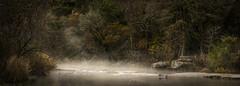 Bones (keith_shuley) Tags: bullcreek creek stream fog foggy mist misty mistymorning austin texas texashillcountry fallcolors