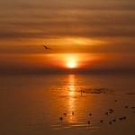 Sunset Bird thumbnail