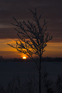 Rural Winter Sunrise