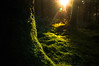 Moss in Caio Forest (Chris J Richards Photography) Tags: caio forest moss trees woodland magical enhanted fantasy afternoon winter wales cymru floor undergrowth golden hour carmarthenshire