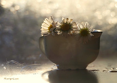 January Daisies ... (MargoLuc) Tags: daisies little lovely flowers white petals light window backlight bokeh cup pottery shadows droplets translucent stilllife feeling spring