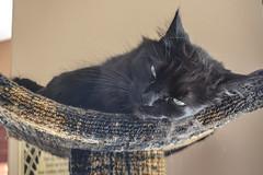 Beautiful Cat (Vegan Butterfly) Tags: baby shower animal cat feline cute adorable black tree