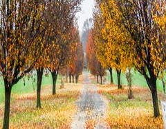 Dreaming of Fall (morethanthis2) Tags: trees fall