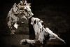 IMG_6557 (M.cnl) Tags: art bois wood sculpture lion animal