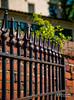 Fence (Kelly_MR) Tags: fence fenceline fencelinefence
