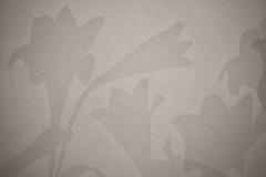 Lilium Longiflorum # 5 (just.Luc) Tags: shadow schadow ombre schatten monochrome monochroom monotone flowers bloemen fleurs blumen wall muur mauer mur
