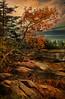 Reminiscence: Southeast Harbor Maine (D'ArcyG) Tags: maine deerisle island northeast rocks leaves autumn sea harbor seaweed evergreens orange ocean bay coast stonington