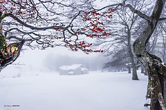 Ametsa (Jabi Artaraz) Tags: jabiartaraz jartaraz zb euskoflickr egiriñao refugio nieve elurra haya pagoa hayedo winter invierno negua blanco verde rojo euskadi gorbea nature paisaje landscpae