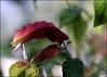 Planting Fields... (angelakanner) Tags: canon70d plantingfields longisland lensbaby composerpro velvet 56