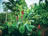 Taman Bukit S.U.K - Seksyen 6 - http://4sq.com/azZvYh #green #nature #tree #grass #travel #holiday #garden #holidayMalaysia #travelMalaysia #Asian #Malaysia #Selangor #Shahalam #大自然 #旅行 #度假 #马来西亚旅行 #马来西亚度假 #亚洲 #马来西亚 #发现马来西亚 #自游马来西亚 #雪兰莪 #花草树木 #公园 (soonlung81) Tags: 大自然 发现马来西亚 自游马来西亚 度假 selangor 马来西亚 malaysia green 马来西亚度假 garden 公园 holiday 旅行 亚洲 tree nature 马来西亚旅行 花草树木 travelmalaysia holidaymalaysia grass 雪兰莪 shahalam asian travel
