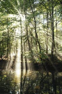 Forest Light [08.18.17]