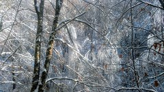 Invierno (jumaro41) Tags: invierno nieve árbol bosque ramas blanco eugui navarra hojas monte montaña naturaleza nature natural troncos