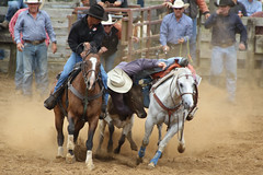 343A7271 (Lxander Photography) Tags: midnorthernrodeo maungatapere rodeo horse bull calf steer action sport arena fall dust barrel racing cowboy cowgirl