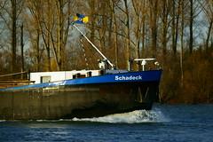 MS SCHADECK (Lutz Blohm) Tags: msschadeck speyer rhein rheinschifffahrt gütermotorschiff binnenschifffahrt binnenschiffe fluskilometer399 sonyalpha7aii fe70300goss