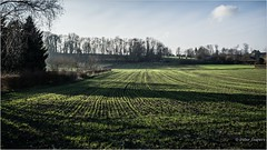 Memory is the fourth dimension to any landscape (Peter Jaspers) Tags: frompeterj© 2018 olympus zuiko omd em10 1240mm28 landscape field sunlight limburg maastricht pietersberg natuurmonumenten encigroeve enci hike winter 169 widescreen grass trees atmosphere shadows