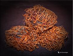 Rambutan (jgbirdmangrossinger) Tags: rambutan fruit edible joegrossinger