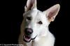 DSC_0222 (xCxSquaredx) Tags: black catch christmas2017 treat dog removedfromstrobistpool nostrobistinfo seerule2
