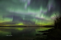 Magical Aurora (Canon Queen Rocks (2,040,000 + views)) Tags: aurora auroraborealis northernlights momentsbycelinecom sky night lights water reflections lake trees silhouettes nature alberta landscape landscapes canada greens purples