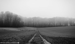 A foggy morning in late January 2. (andreasheinrich) Tags: landscape path fields forest fog winter january blackandwhite blackandwhitephotos misty cold germany badenwürttemberg neckarsulm dahenfeld deutschland landschaft weg felder wald nebel januar schwarzweis neblig kalt nikond7000