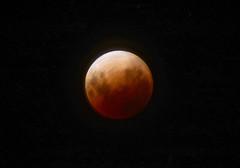 Super Moon 31 January 2018_7832_2 (Rikx) Tags: supermoon moon eclipse red blood bloodmoon bluemoon sunset sunrise light beautiful sky night nightsky adelaide southaustralia 31january2018