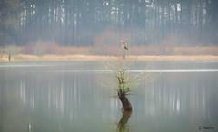 Shrouded in Fog (Suzanham) Tags: trees water lake bird mist fog winter weather heron cypresstree waterscape landscape nature wildlife mississippi noxubeewildliferefuge southern reflections
