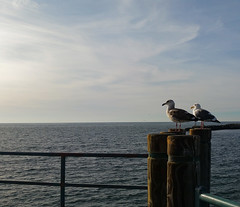 Ocean Gazing With a Buddy (uhhey) Tags: ocean birds california
