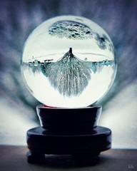 Wonderland (blamstur) Tags: snow winter crystalball round tree upsidedown 15challengeswinner