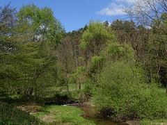 La Sauer (Edouard55) Tags: france grandest lembach d925 lasauer saarbach vosgesdunord parcnaturelrégional