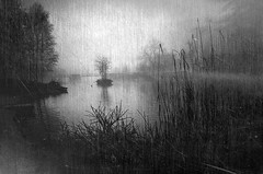 Misty Park (Bill Eiffert) Tags: park texture lake mist trees natue reeds plants