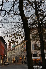 reggio centro (imma.brunetti) Tags: emiliaromagna reggioemilia italia foglie alberi rami tronchi edifici case finestre tetti strada vicoli piazza