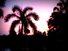 Sarasota Sunset (soniaadammurray - Off) Tags: iphone sunset trees platform nest quartasunset sarasota florida usa reflections