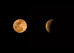 dumb luck...Super Blue Blood Moon (Alvin Harp) Tags: superbluebloodmoon eclipse fullmoon bloodmoon january312018 january 2018 milpitas bakersfield california moon sonyilce7rm3 fe70200mmf28 gmoss2x alvinharp
