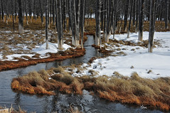 Winter in Yellowstone National Park - 6195b+ (teagden) Tags: winter winterscene winterphotography winterlandscape snow jenniferhall jenhall jenhallphotography naturephotography nature photography nikon landscape landscapephotography yellowstonenationalpark yellowstone ynp scenic
