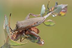 DSC_9240 (crispy1612) Tags: nikon r1c1 105mm macro d750 bug life insects