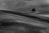 Solitario (Michele Fini) Tags: albero solitario minimal terra onde cielo nuvole campagna puglia colline monocromatico black white