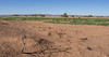 Green in the Desert - Draa Tal-1 (Piefke La Belle) Tags: kef aziza morocco marokko moroc ouarzazate mhamid zagora french foreign legion fort tazzougerte