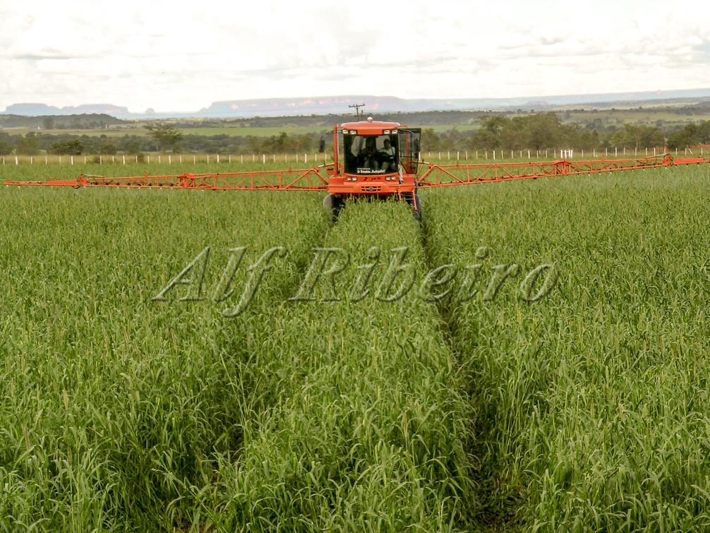Best Natural Pesticide For Corn