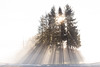 shining forest (Stadlmayr Photography) Tags: canon 6d 24105l 35mm strahlend bäume baum wald sonnig nebel sunny fog jännerrallye mühlviertel oö austria österreich kurve