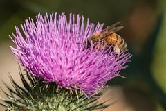 20180122-IMG_5456.jpg (tastigr) Tags: australia afternoon victoria macro wildlife macedonranges summer