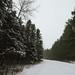 Fresh Snow - Banning State Park, Minnesota