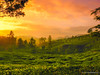 Tea Gardens (bnilesh) Tags: click mobile mobilephotography oneplus landscape kerala munnar teagarden sky clouds