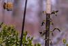 _DSC0282 (dixiedog) Tags: cardinal goldfinch birds wildlife