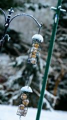 really just playing with a lens (and thinking the birdfeeder needs straightening!) (grahamrobb888) Tags: nikon nikond800 d800 nikkor afnikkor80200mm128ed bokeh birnamwood birnam homegarden home birdfeeder garden seeds perthshire winter