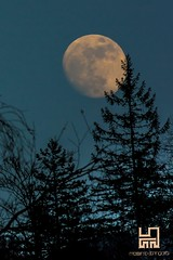 SUPER LUNA (Lace1952) Tags: luna superluna alberi abete bosco sera notte ossola vco italia nikond7100 nikkor18300vr