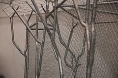 Tube-Bend-Tree-Art6 (steelfencesupply) Tags: bendfence tube tree weld fabricate fabricating fabrication cali califence sanjose companyoffence sanjosefence california linkfence chainlinkfence fence steelfencesupply welder weldingfence metal working welding iron steel sparkle pipes art barbedwireart showforfenceart fenceart artforfence fencetie railendband post chain linepost line top lineposttop toprail tensionband railend gatefork gateforklatch terminalpostcap tensionwireclip wireclip bottomtension bottomtensionwire terminalpost tensionbar gatepost gateposthinge gateframe gateframehinge frontview link chainfence fencing barb wire barbed bending tubing artistic santa clara university exhibit beyond